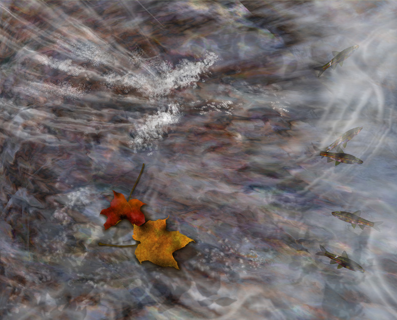 Leaves On Stream with Fish
