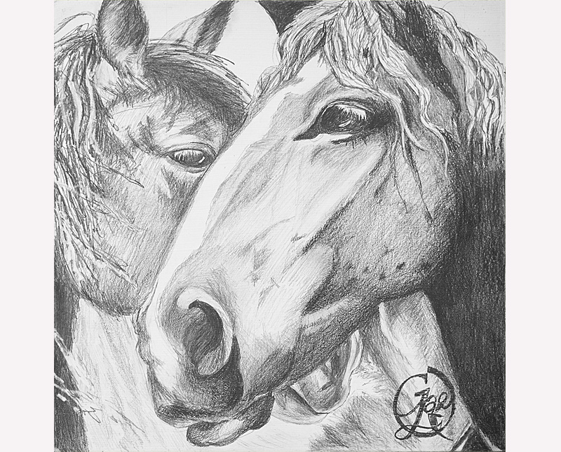 Drawing of two horses